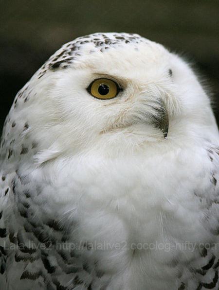 Owl200904201_2
