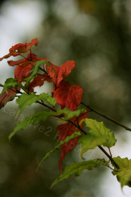 Autumnleaves20091124_2