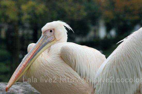 Pelican200911241