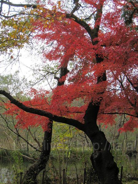 Autumn200911295