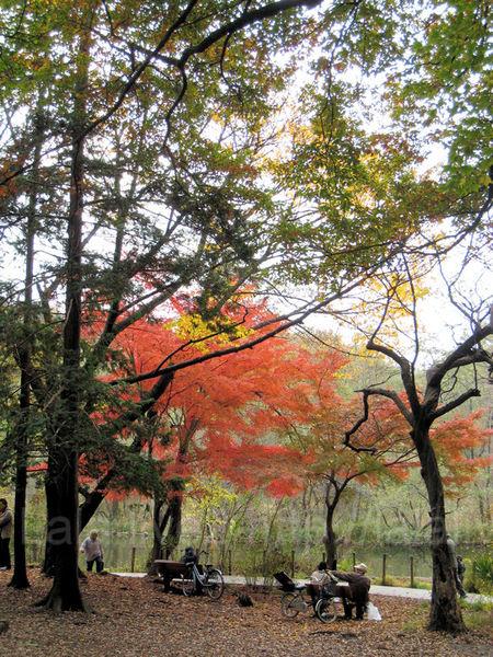 Autumn200911296