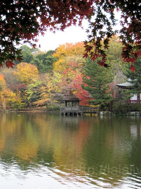 Autumn20091129_3