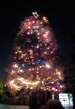 Tree20091206_2