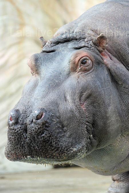 Hippo201002091