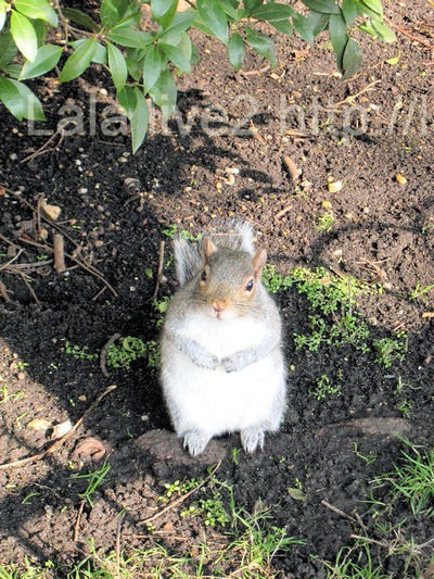Squirrel201002201_2