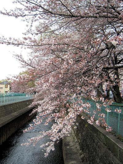 Sakura20100227