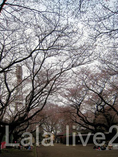 Sakura201003271