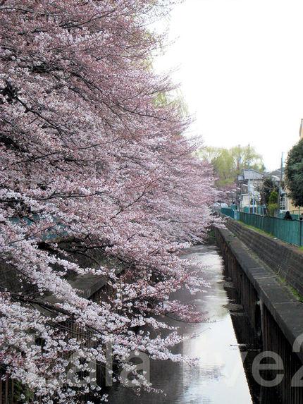 Sakura201003272