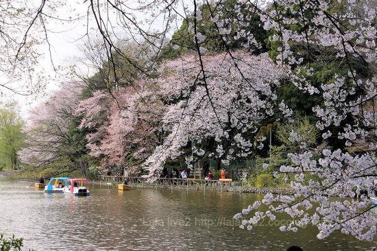 Sakura201004031