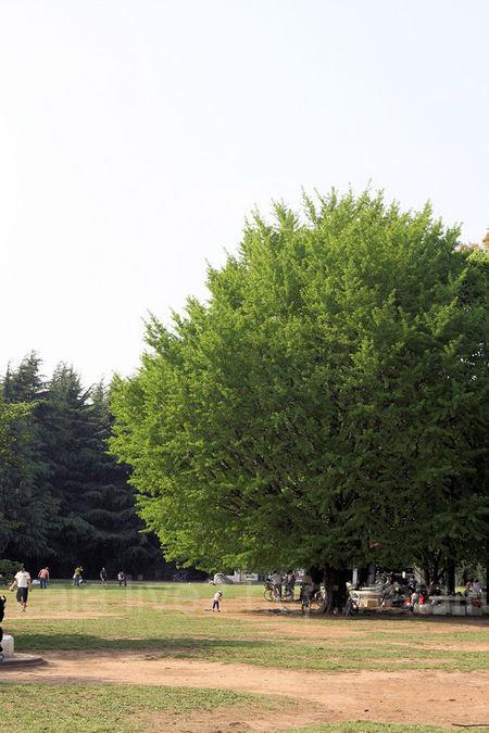 Hikarigaoka20100505