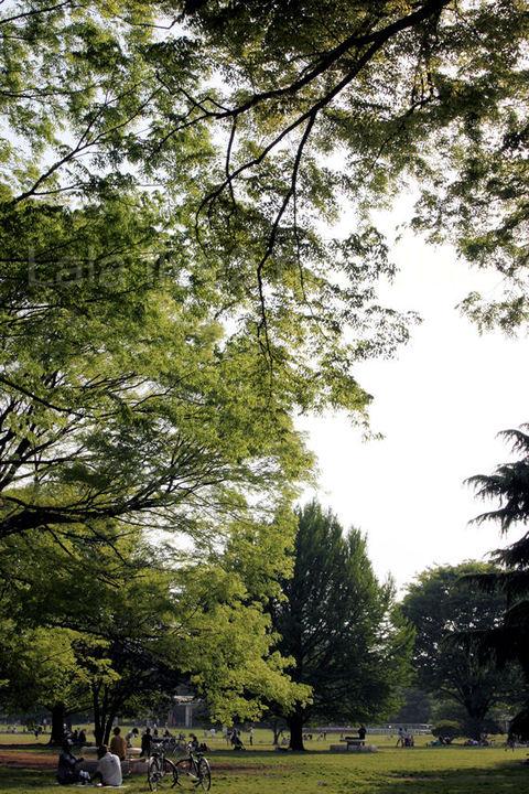Hikarigaoka201005051