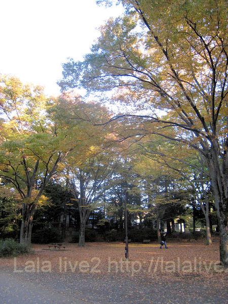 Kouyou201011121