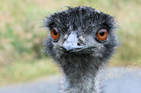 Emu201010281_2