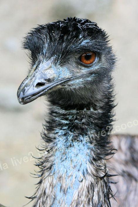 Emu201010282