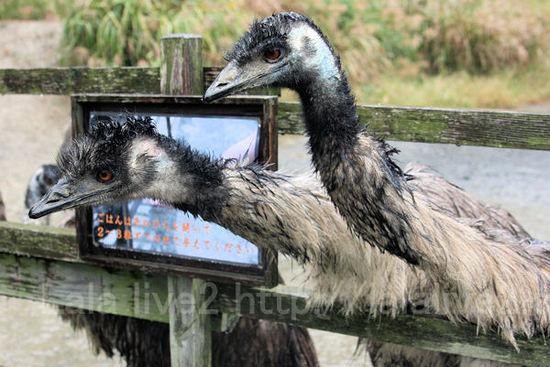 Emu201010284