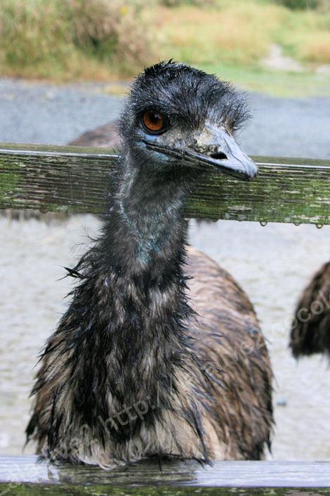 Emu201010285