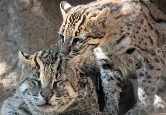 Fishingcat20080415