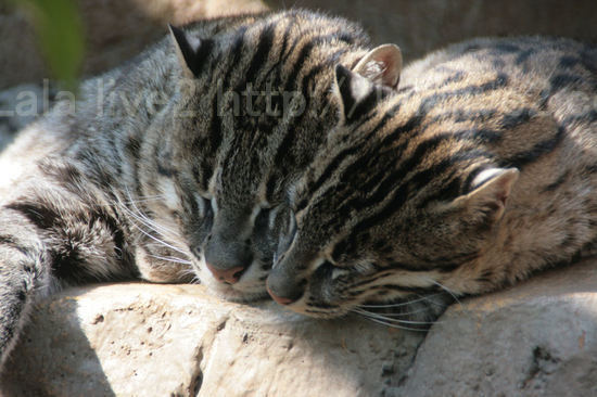 Fishingcat200804154