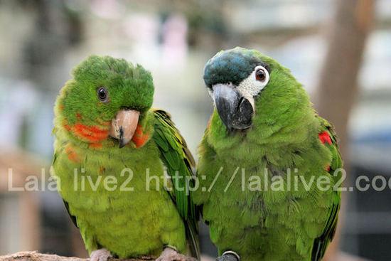 Macawconure20101027