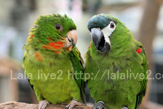 Macawconure201010273