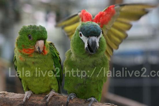 Macawconure2201010271