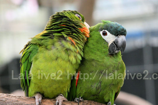 Macawconure2201010272