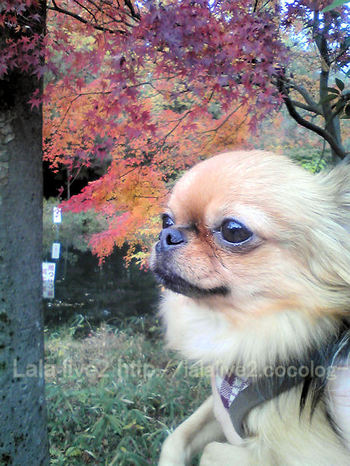 Maru_in_the_park_20101126