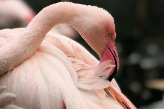 Flamingo20101028
