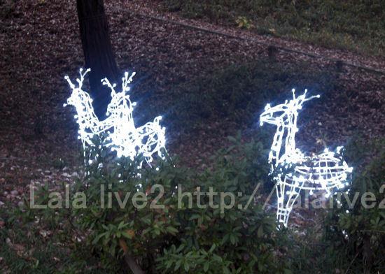 Xmas_lights201012072
