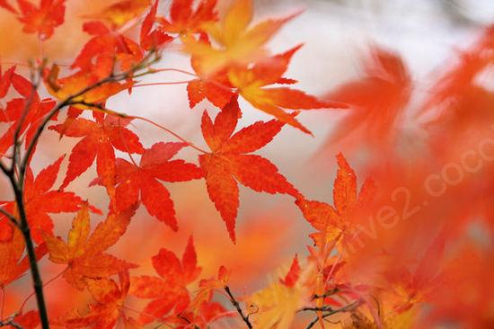 Autumnleaves201012072