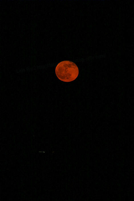 Redmoon201012223_4