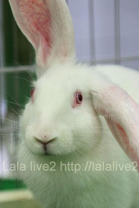 Rabbit20101207