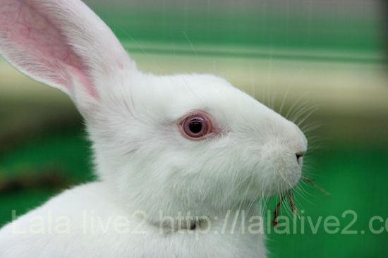 Rabbit201012071