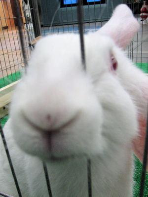 Rabbit201012072