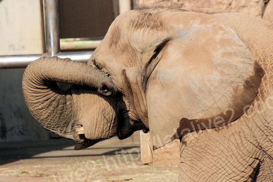Africanelephant2010120711