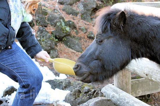Pony20110111