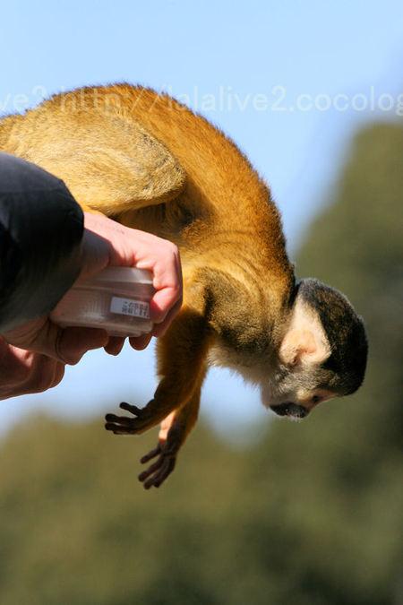 Monkey20110112