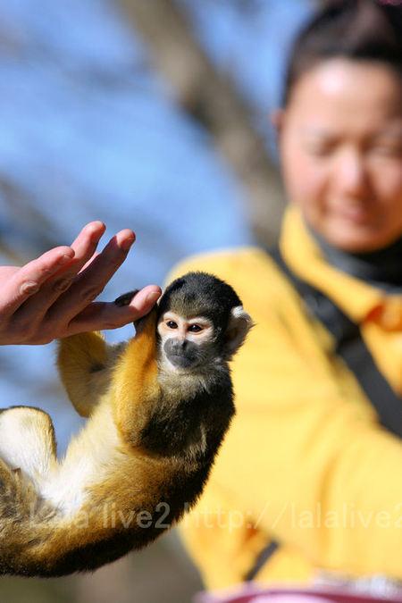 Monkey201101121