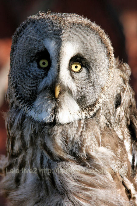 Owl20110111