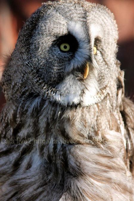 Owl201101111