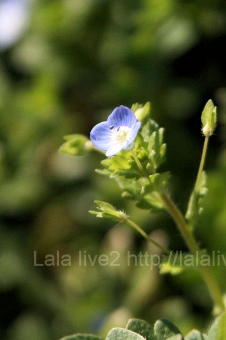 Flower20110328