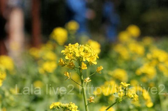 Flowers201103281