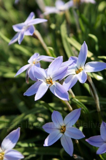 Flowers201103282_2