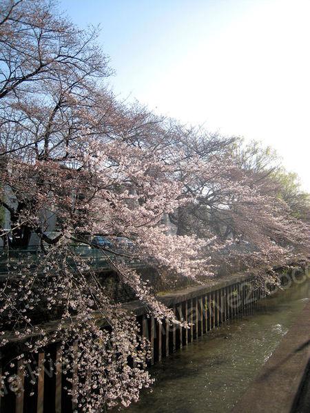 Sakura201104013