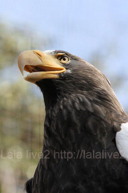 Eagle20110303