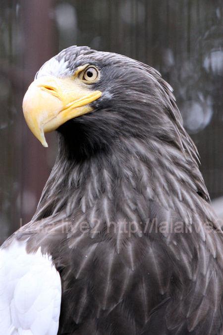 Eagle201103031
