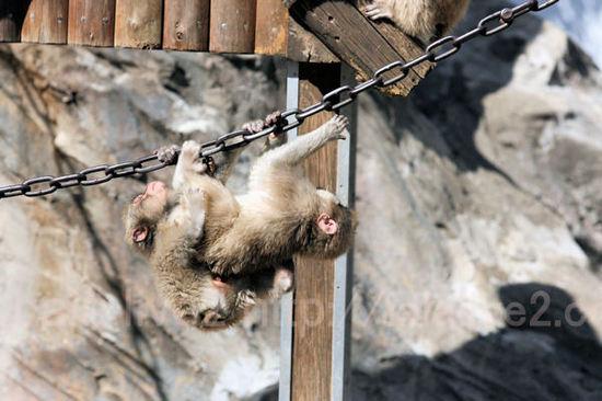 Monkeys20110303