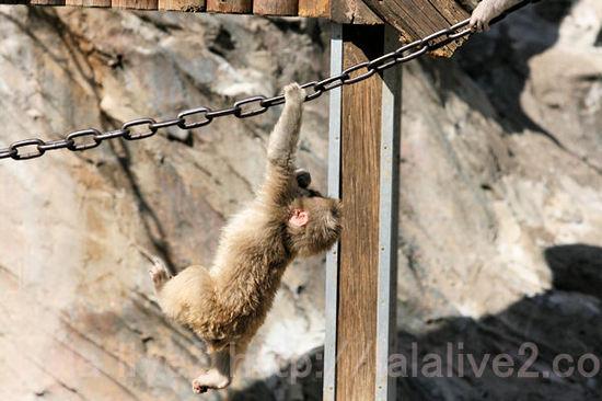 Monkeys201103031