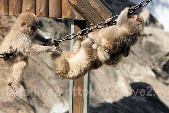 Monkeys201103033