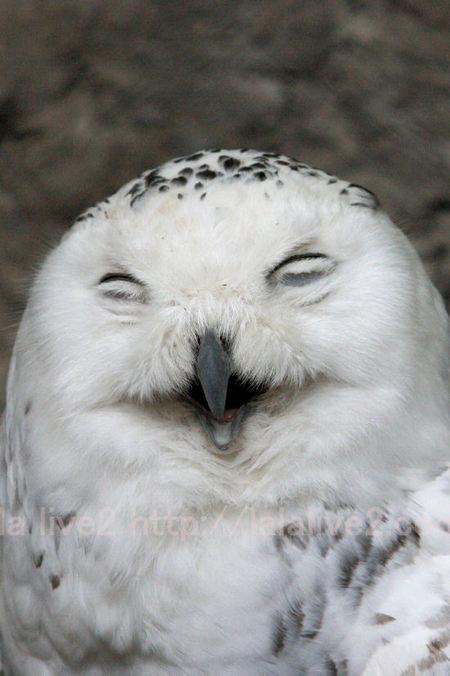 Owl20110519